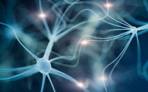 El cerebro y el universo: más parecidos de lo que pensamos