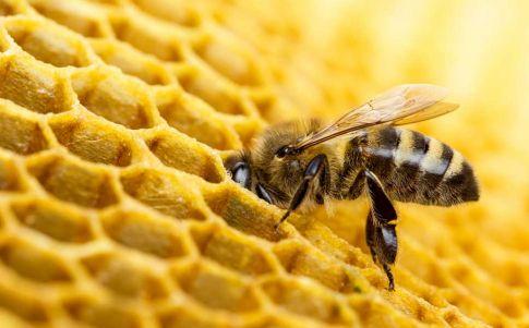 El negocio etrusco de la miel durante la Edad del Hierro