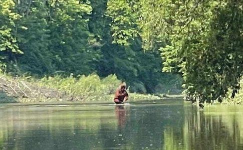Aseguran haber grabado un bigfoot con su cría en brazos en Michigan (Youtube/ Rocky Mountain Sasquatch)