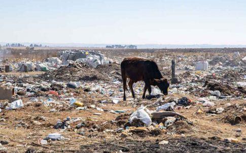 Los animales están cambiando su forma para sobrevivir al cambio climático