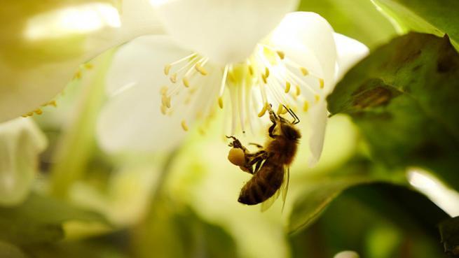 Las abejas se extinguen... los humanos podríamos ser los siguientes