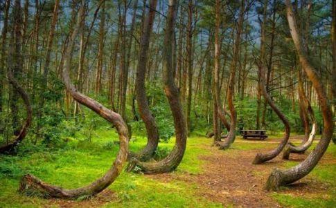 Los arboles crecen extrañamente torcidos en el interior del bosque
