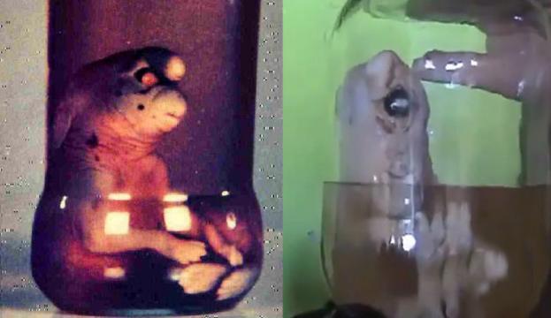 Resultado de imagen para gnomo girona extraterrestre obando colombia